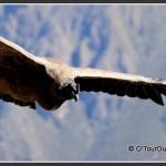 Arequipa & Le Canyon de Colca
