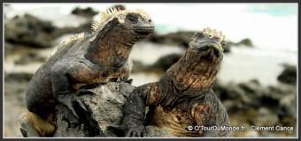 Galapagos un archipel unique