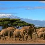 Goûtez au Safari Kenyan !