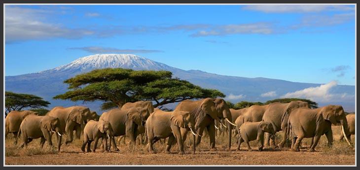 Safari-Kenyan
