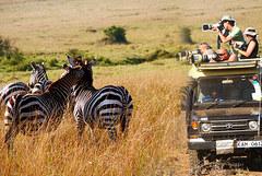 kenyan-safari