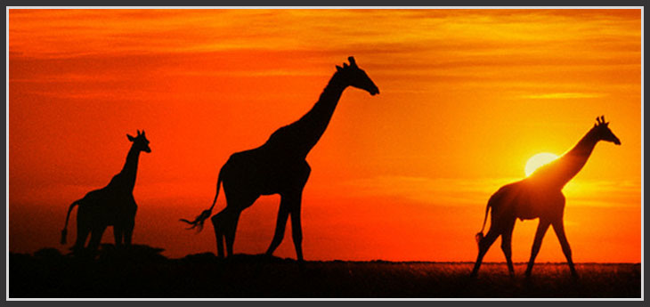 south-africa-afrique-sud