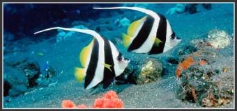 Plongée sous-marine : Destinations incontournables