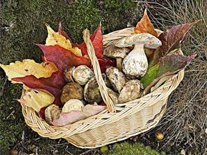 automne champignon