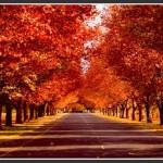 Voyager en automne : Toussaint et jours fériés