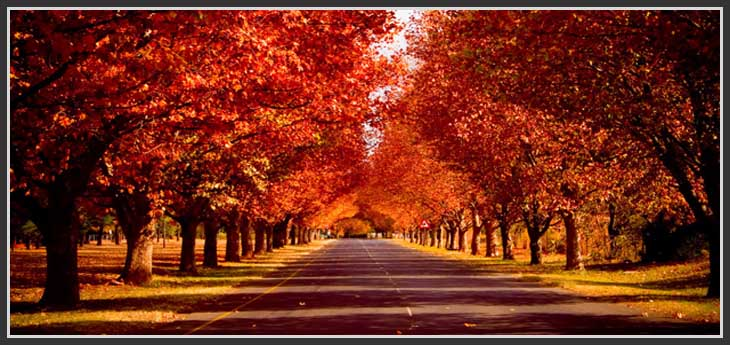 vacances-toussaint-automne