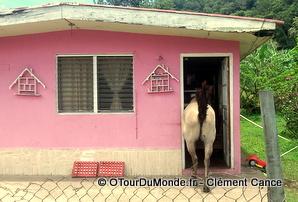 maison à Boquete
