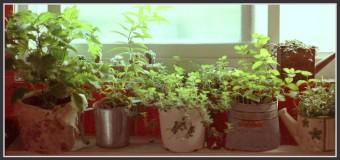Astuces Plantes & Voyage