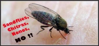 Remèdes contre les Sandflies