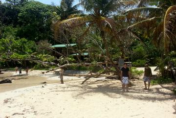 sandflies-plage