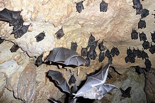 grotte nividia - bahia honda